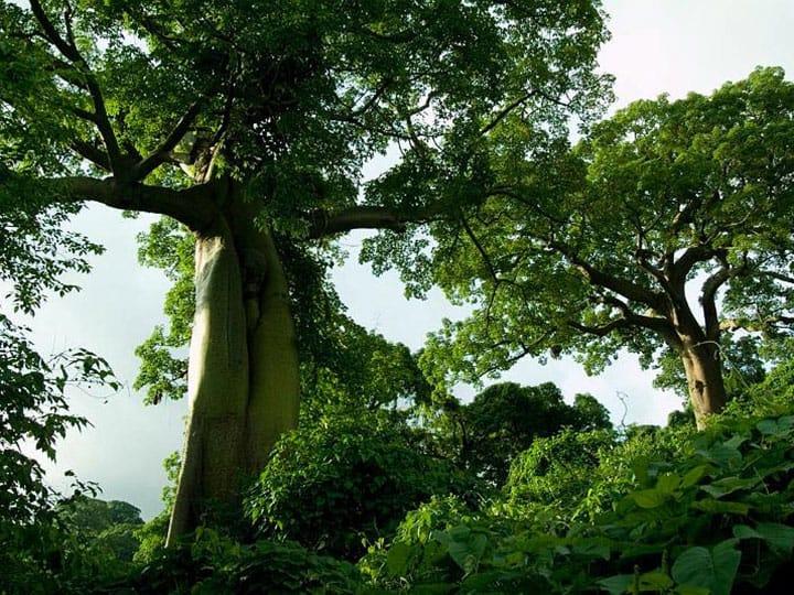 Guide to 4 of Ecuador Ecosystems: Forests (Mangrove, Dry ...  Guide to 4 of E...